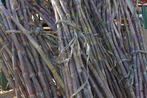 sugarcane-2857972_640.jpg